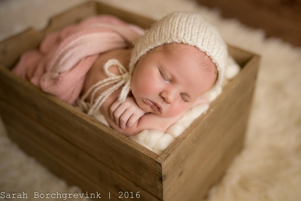 Posed Newborn Photos | Sarah Borchgrevink