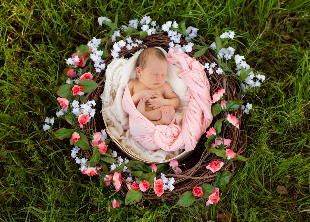 Cypress Newborn Photography   Sarah Borchgrevink