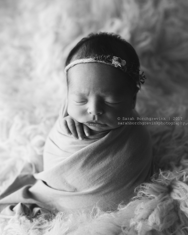 Houston TX Newborn Photography by Sarah Borchgrevink Photography