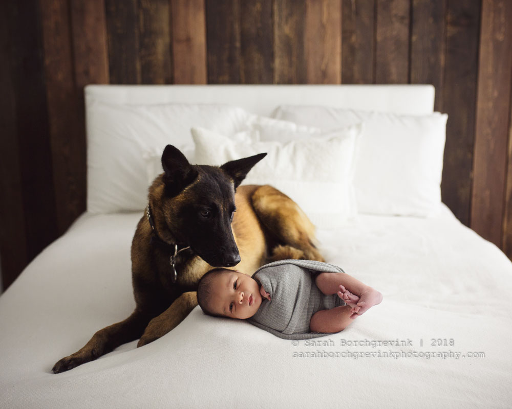 Newborn photography with family dog in session