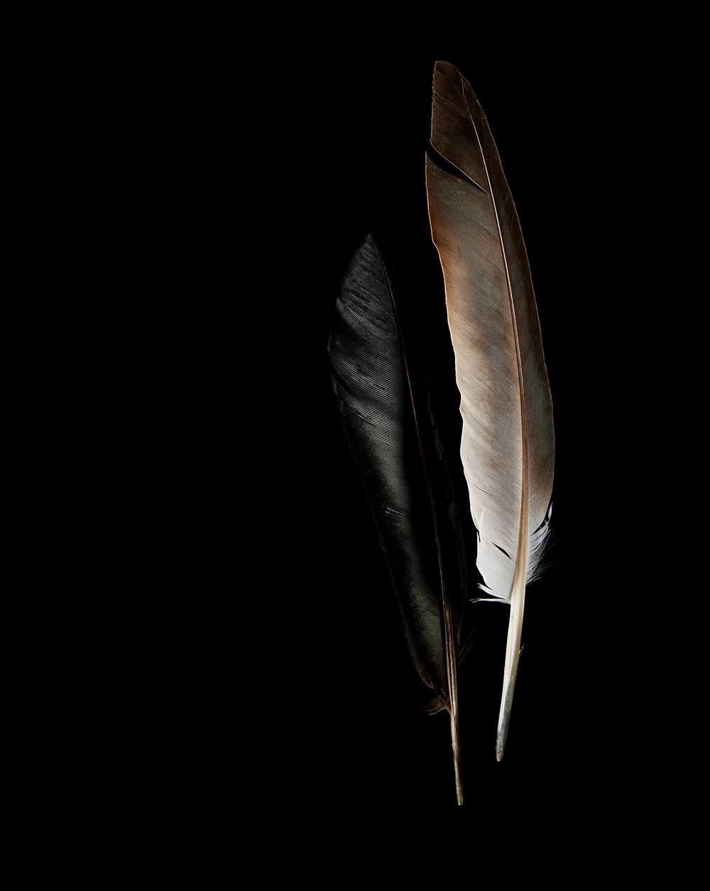 feathers 28.5x20.5.jpg