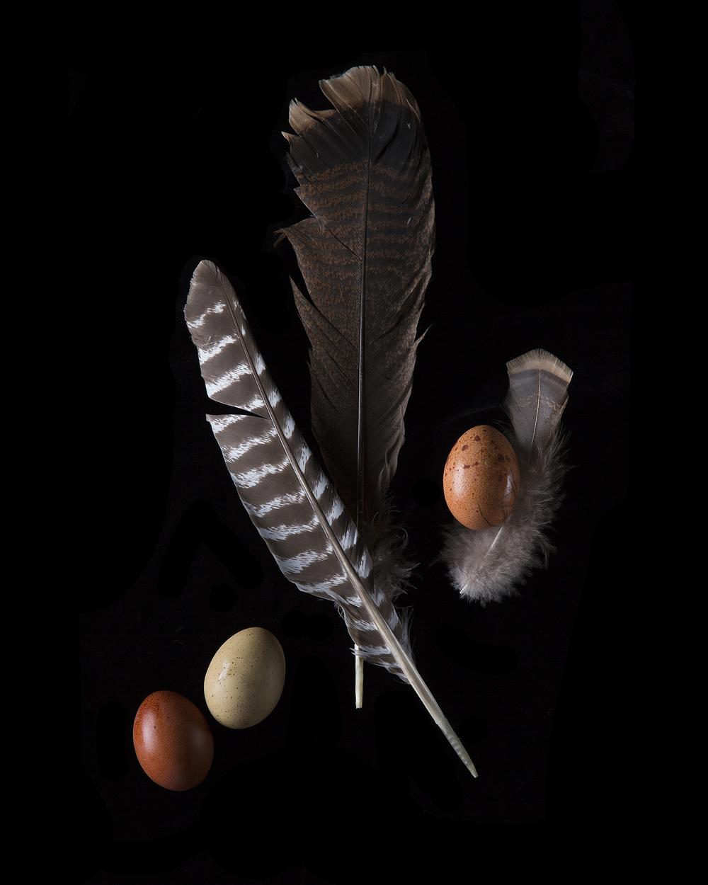 3egg w turkey feathers.jpg