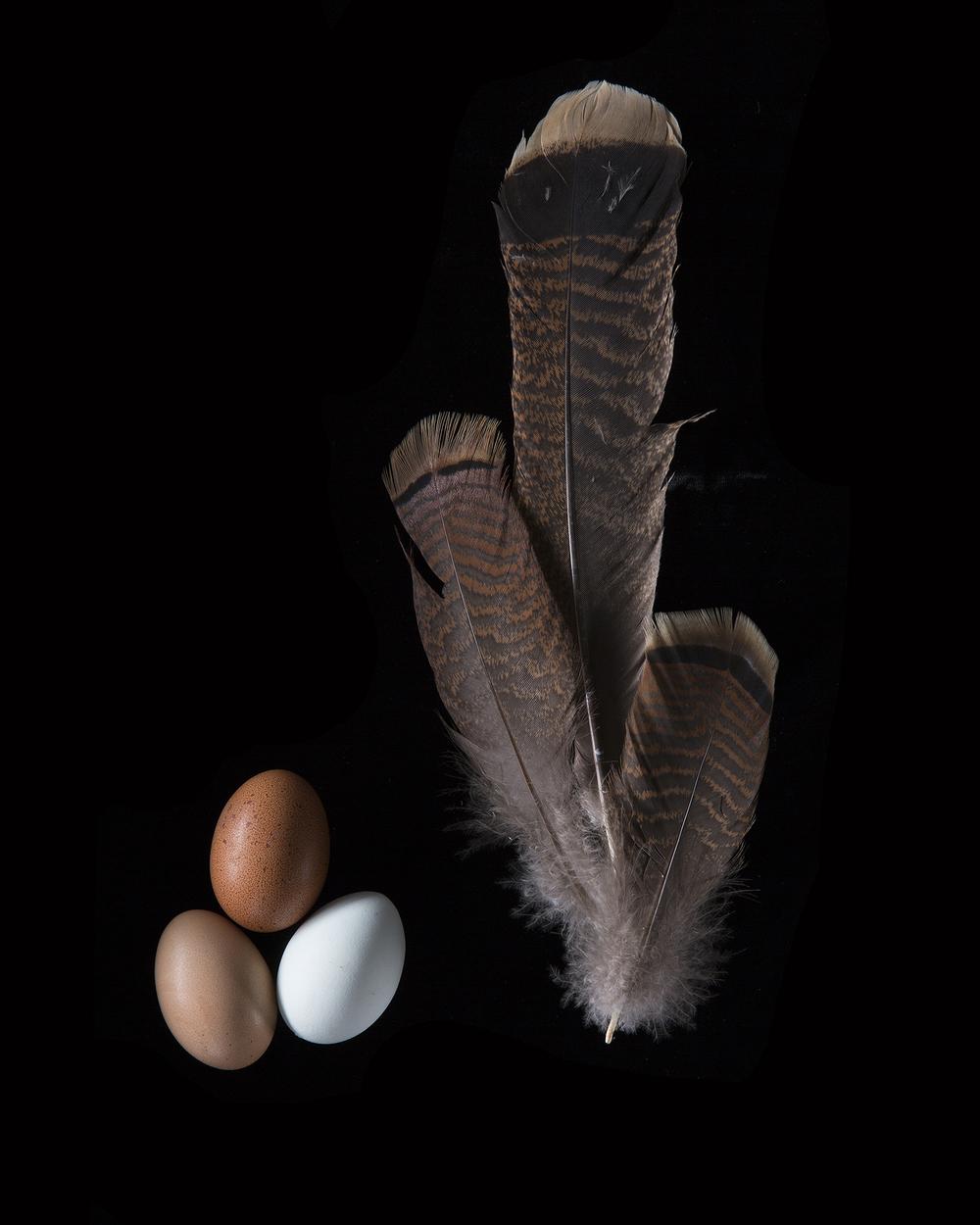 turkey and eggs.jpg