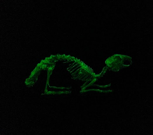 """Homage to Alba"" glow in the dark rabbit as part of the ""Soon After"" installation"
