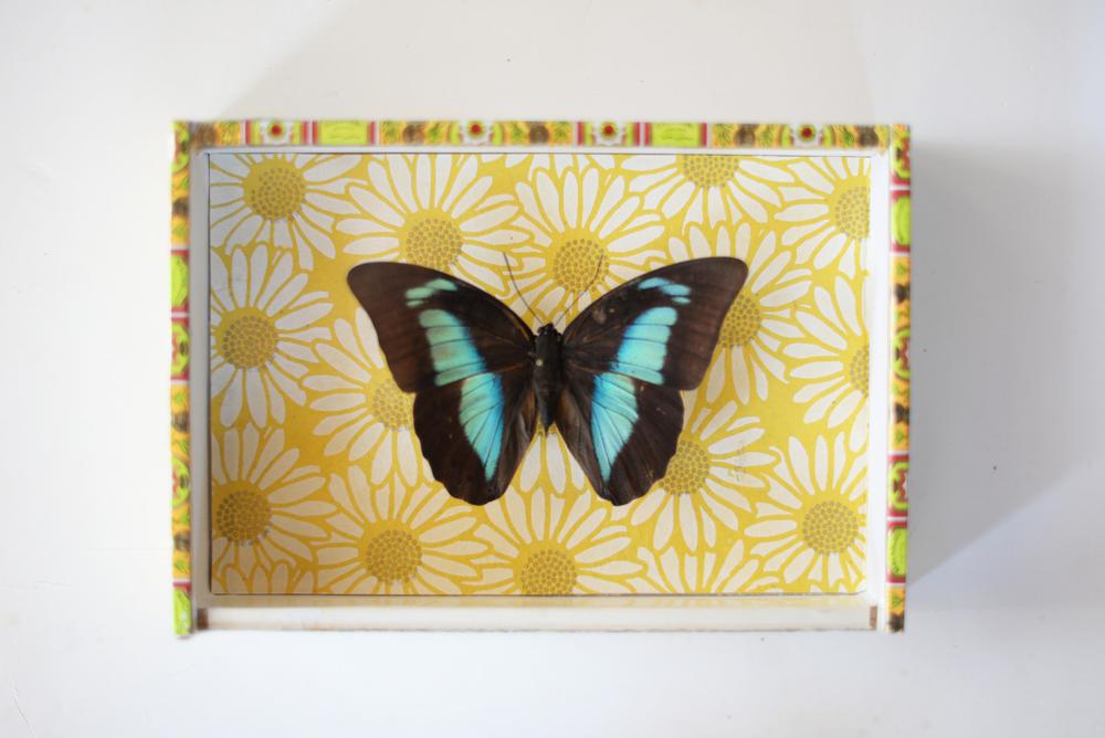 butterfly 11.jpg