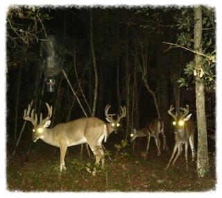 GA-deer.jpg