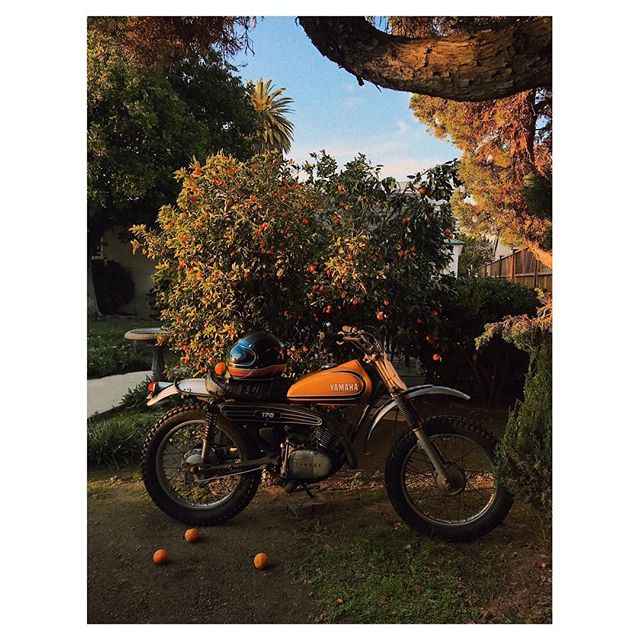 Caught #LilBebeBike lookin right at home in the new back yard. ;) #iphone7 #yamaha #1973 #california #orangefruits #candid