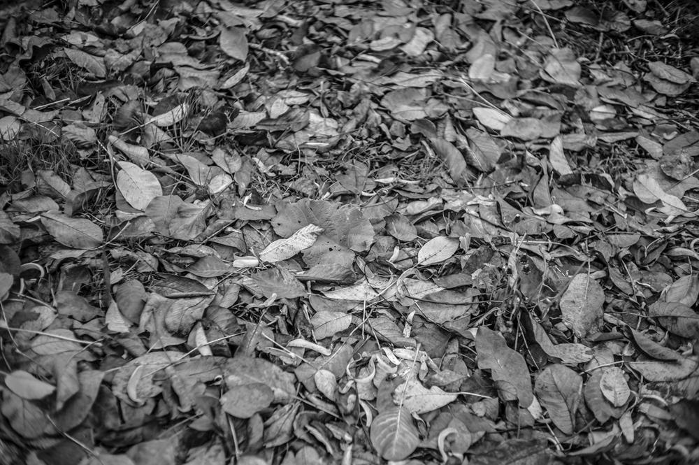 Leica Monochrom50mm Summilux-M f1.4