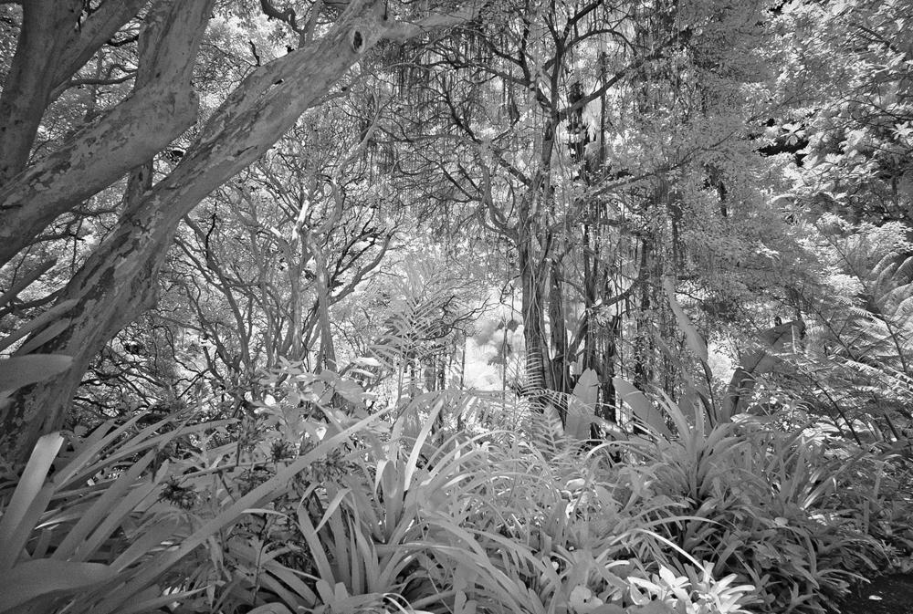 Leica M8 15mm Voightlander f4.5 with IR filter