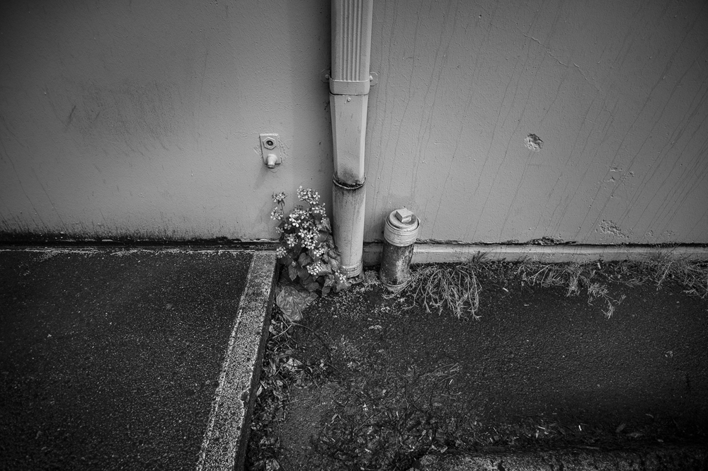 Leica Monochrom 21mm Voigtlander Color-Skopar