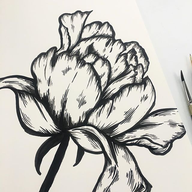 Taking a bit of a break from fashion illustration to get these florals out of my brain and onto paper ✍️ I've been working on this fine art collection to officially launch my new business endeavor -@house_of_violette 💜 Happy Friday ya'll! #kellymuschianaillustration #happyfriday #botanicalart #botanicalillustration #floralart #floralpainting #dsart #blackandwhite #ink #illustratorsofinstagram #calledtobecreative
