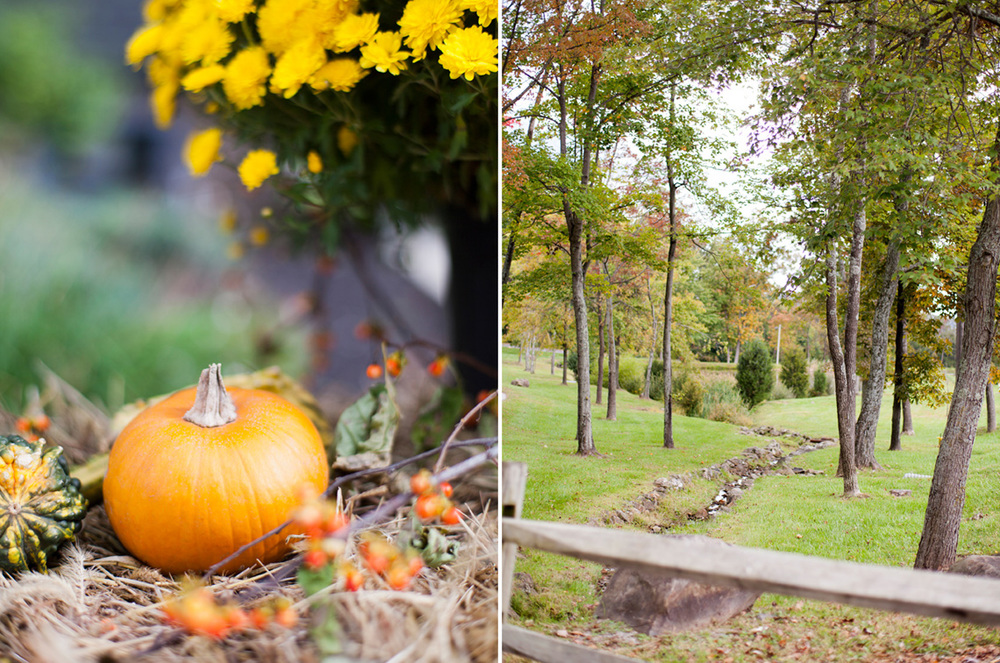 2-Wedding-Photography-York-PA-Ken-Bruggeman-Photography-Pumpkin-Trees-Outdoors.jpg