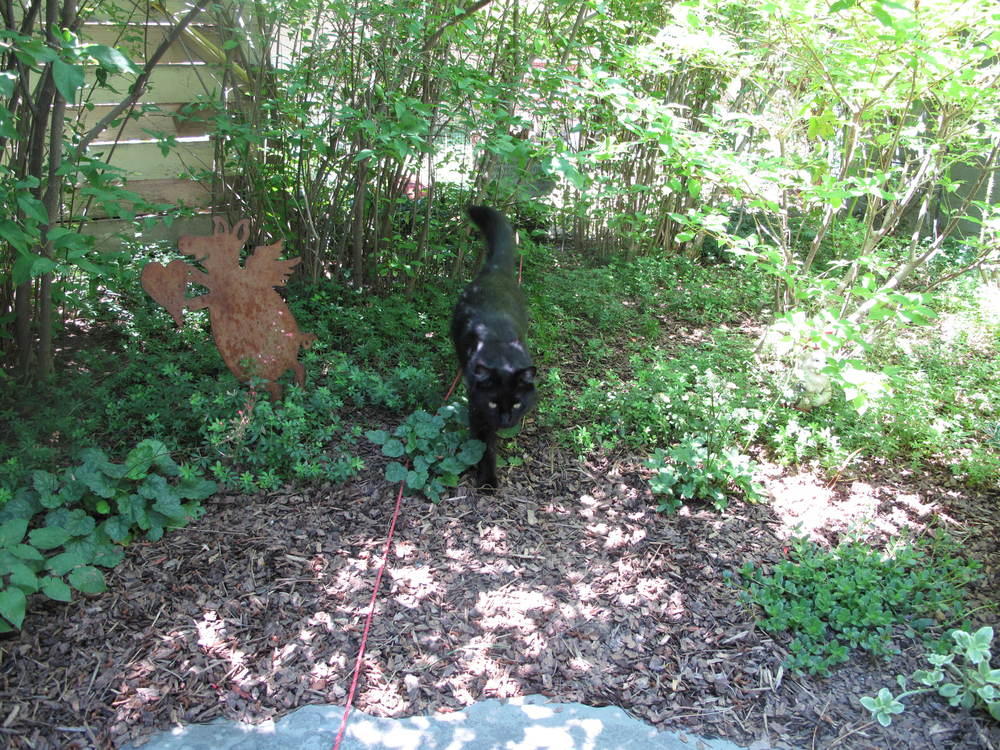 Mina emerging from a hunt. Note her red safety rope.