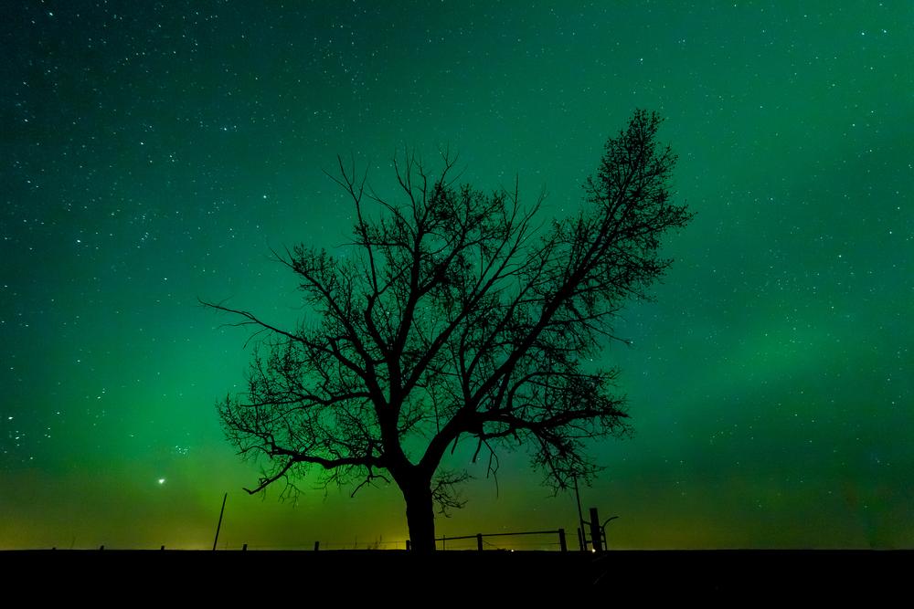 TreeAurora-1.jpg