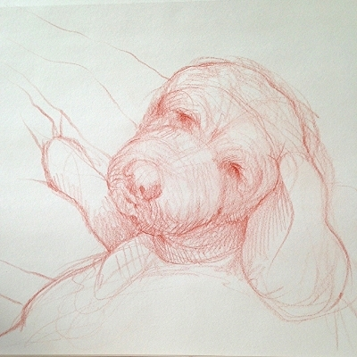 Sketch of my pup Captain.