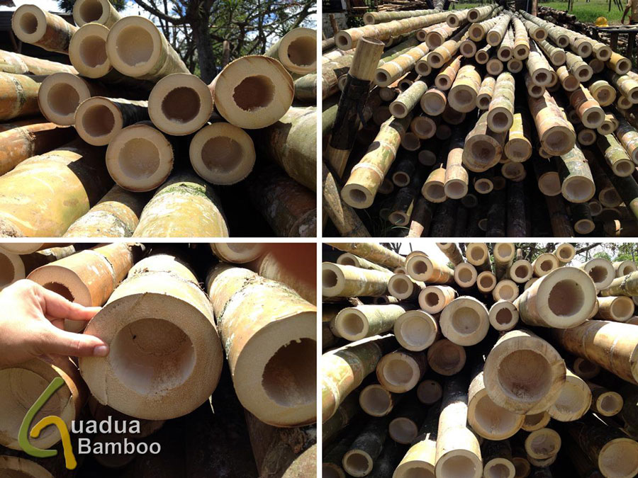 Guadua Bamboo Wall Thickness
