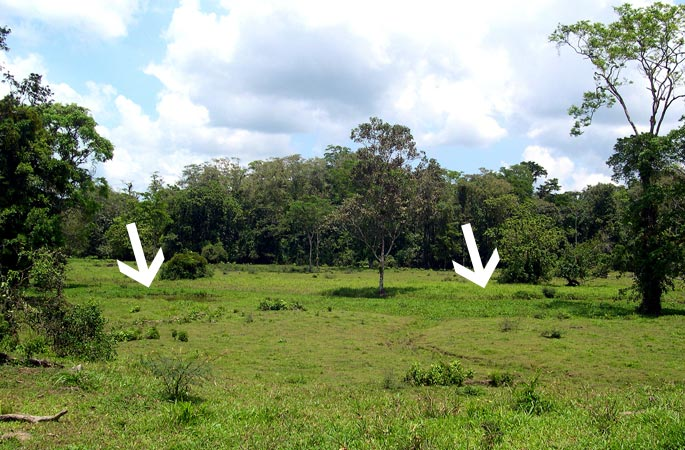 Arrows indicate typical vegetation for floodplains
