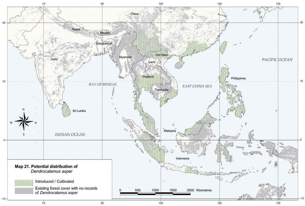 Dendrocalamus asper Distribution Map