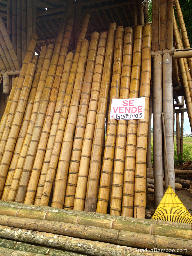 Treated Bamboo Poles