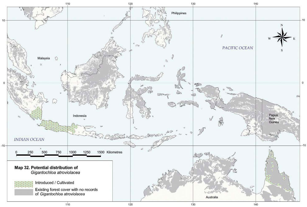 Gigantochloa atroviolacea Distribution Map
