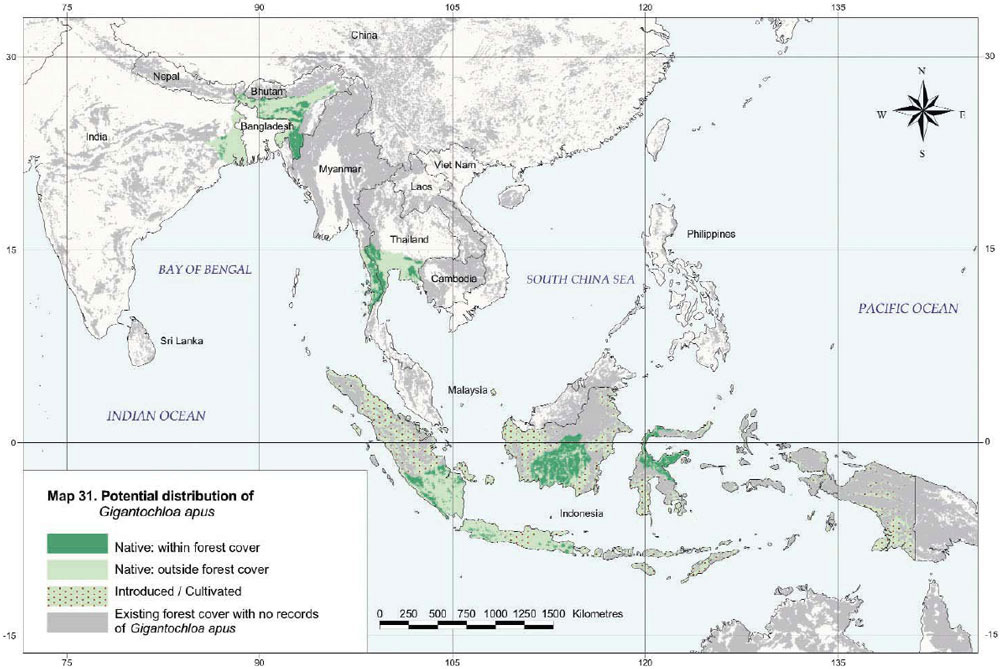 Gigantochloa Apus Distribution Map