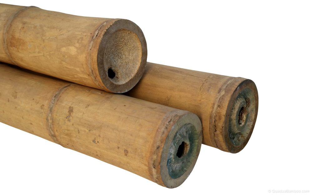 Guadua Poles  Treated, dried and selected on maturity, straightness, diameter and wall thickness, Grade A quality.