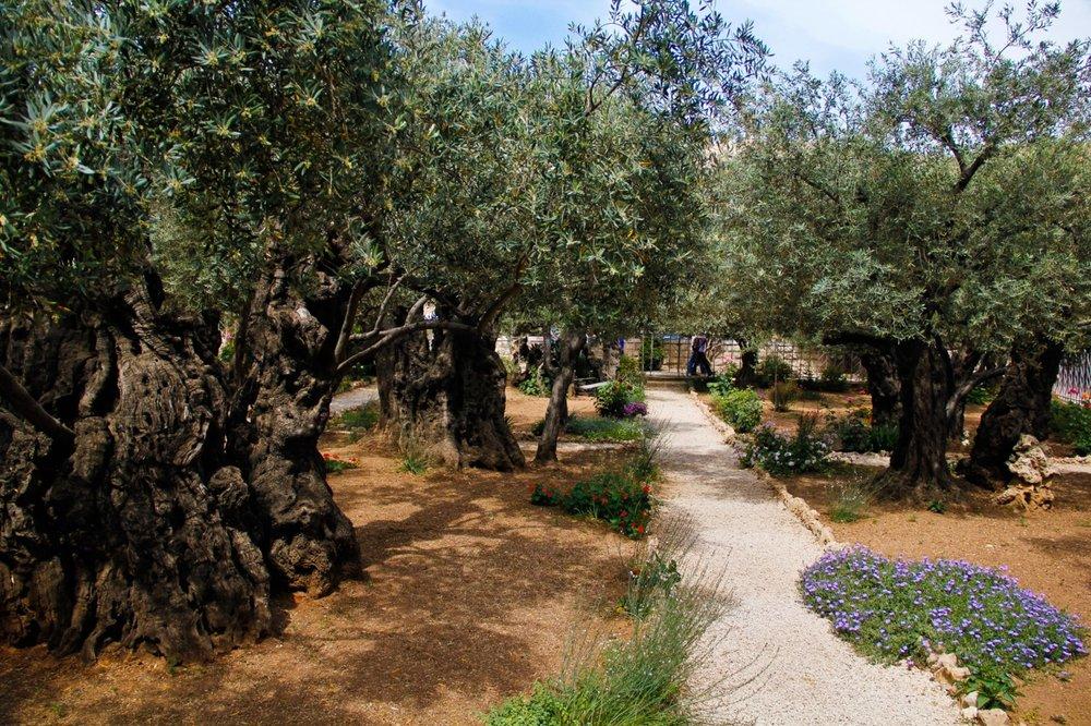 garden-of-gethsemane2.jpg