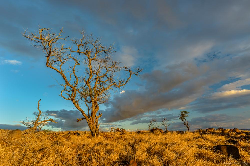 Donald _Carlton_Landscape-024.jpg
