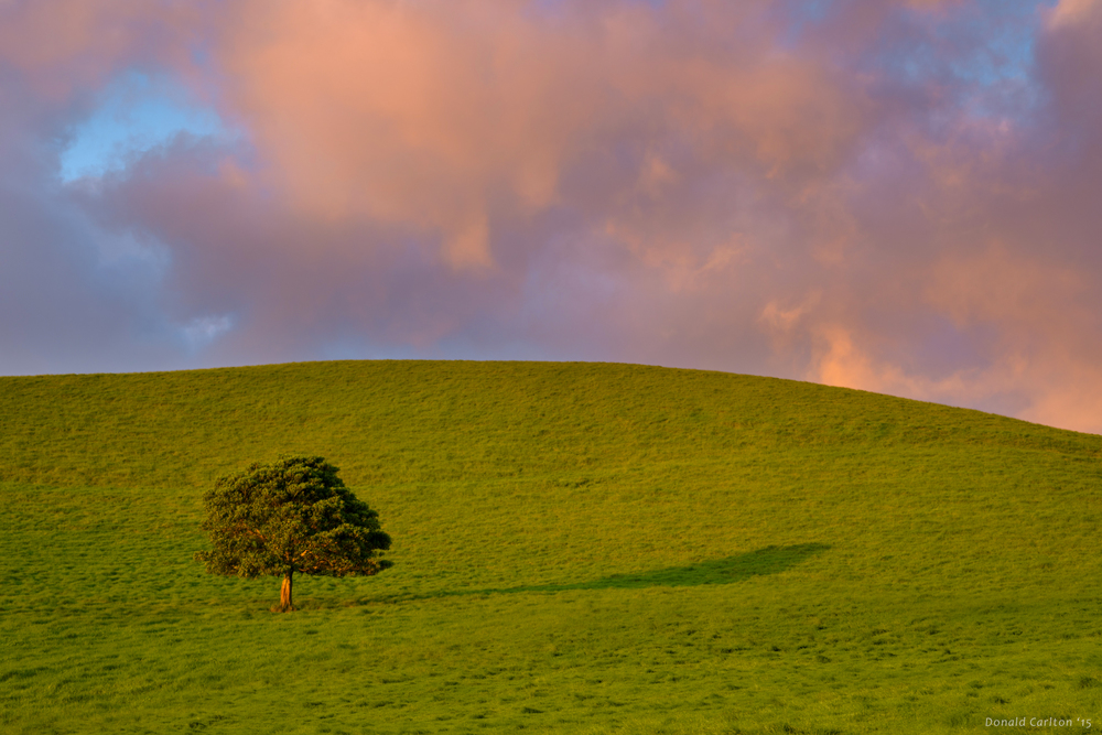 Donald _Carlton_Landscape-034.jpg