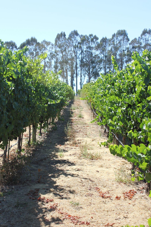 etude winery 3
