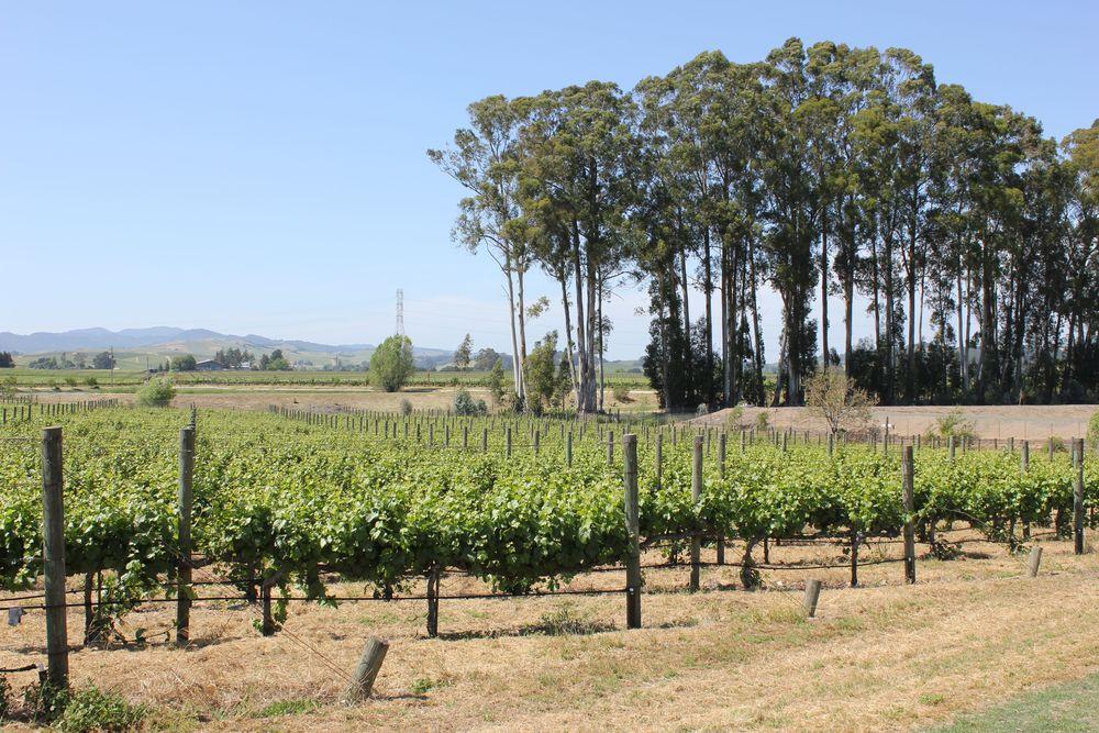 etude winery 6
