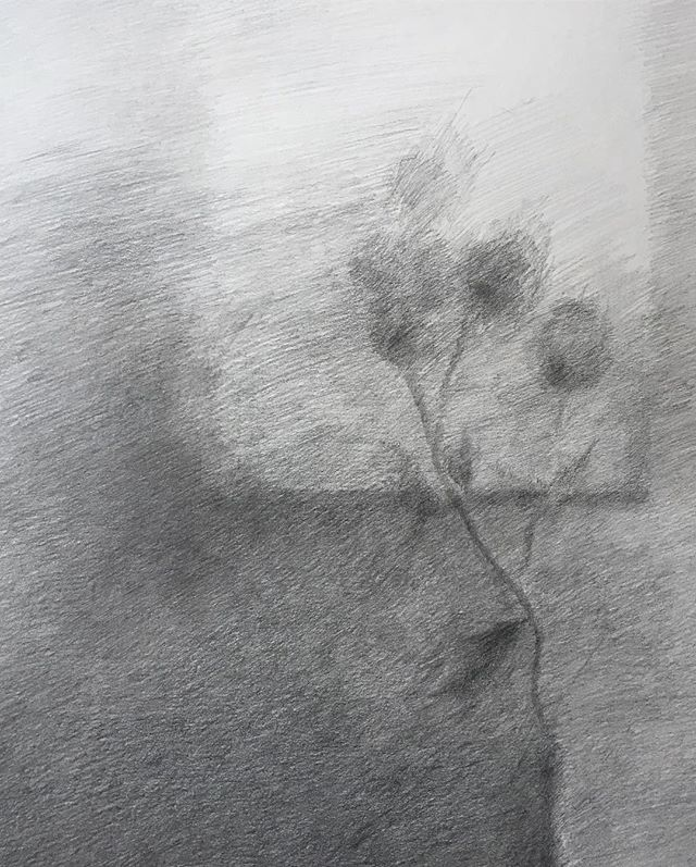 Untitled / graphite on Hahnemühle. 500 x 650 mm