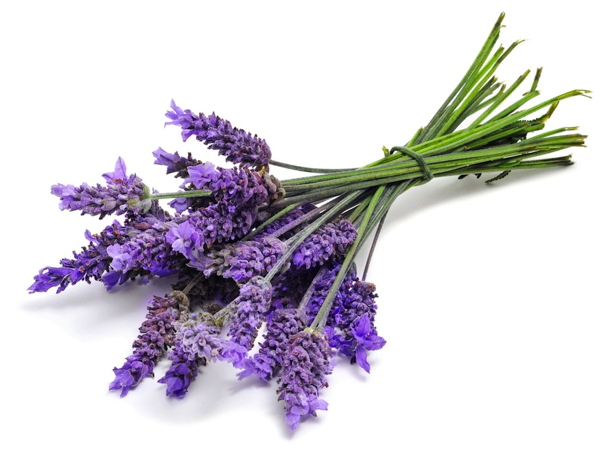 Lavender - Spice of the Month August 2014