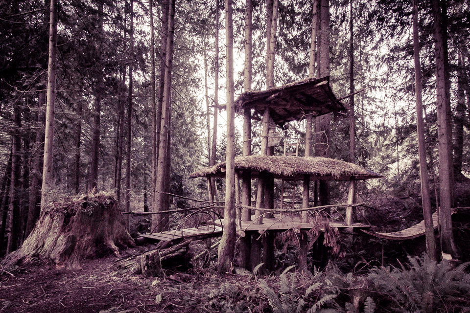 Tree Fort. Note the size of the stump!