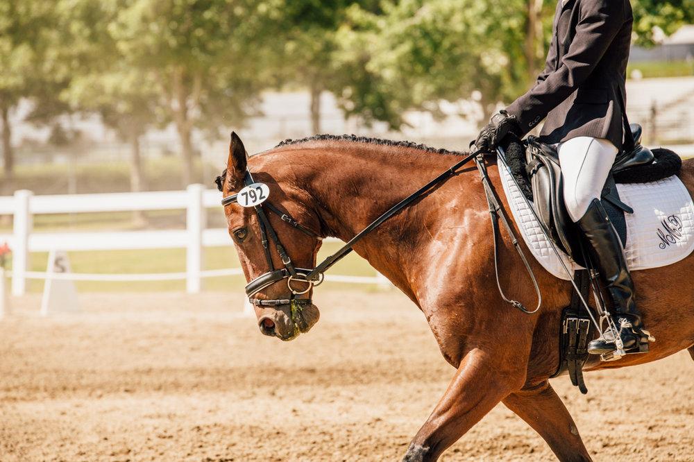 Rachael Renee Horse Photography Web-28.jpg