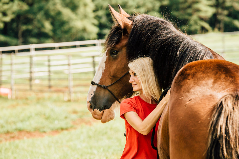 classic city clydes horse photographer rachael renee photography Web-50.jpg
