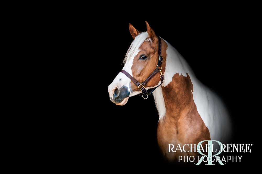 lacey mcgraw and her horses athens photographer rachael renee photography Web-23.jpg