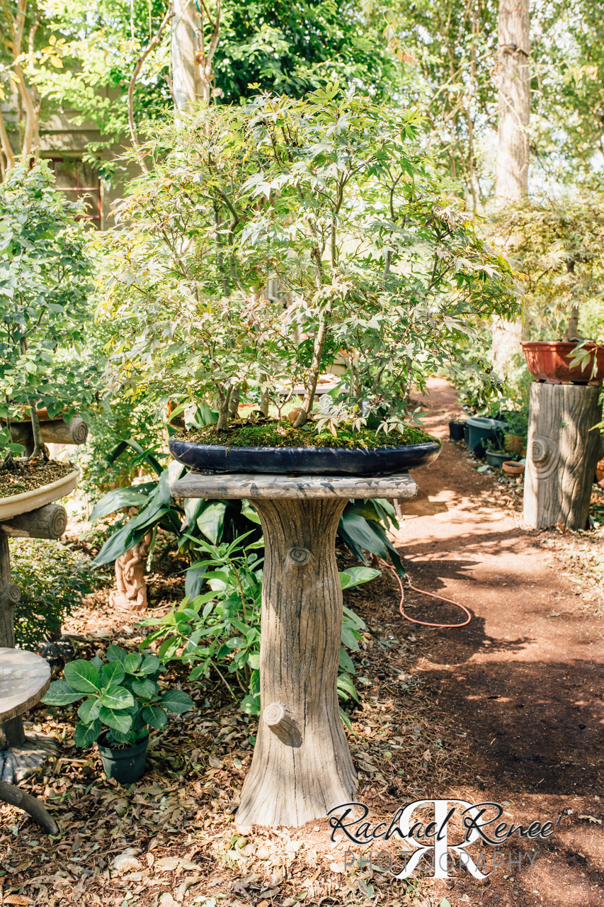 Elm St Gardens or Oasis Family Farm Web-2.jpg