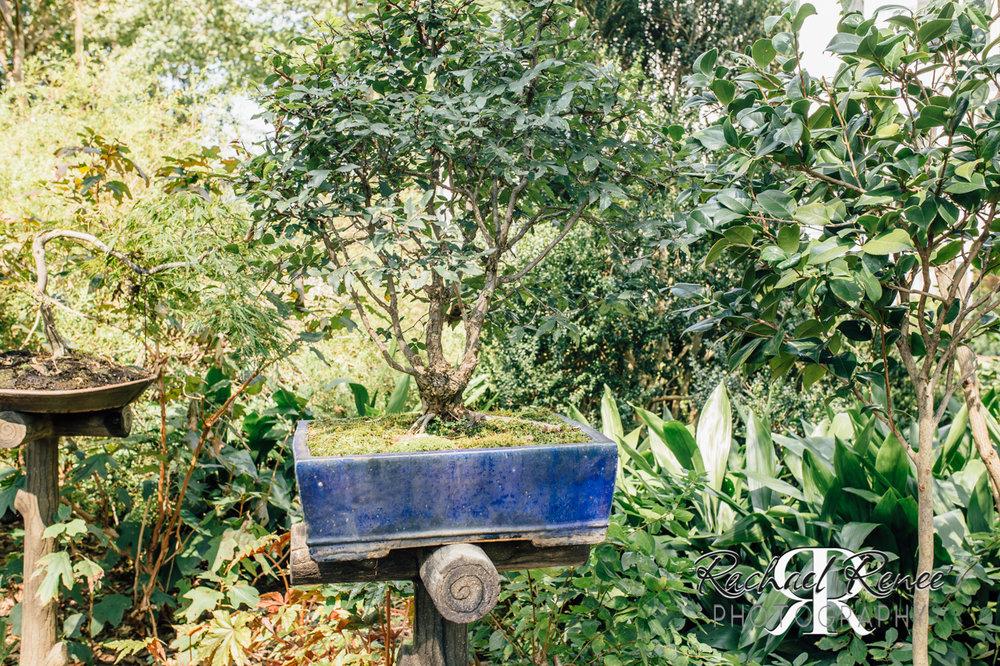 Elm St Gardens or Oasis Family Farm Web-3.jpg