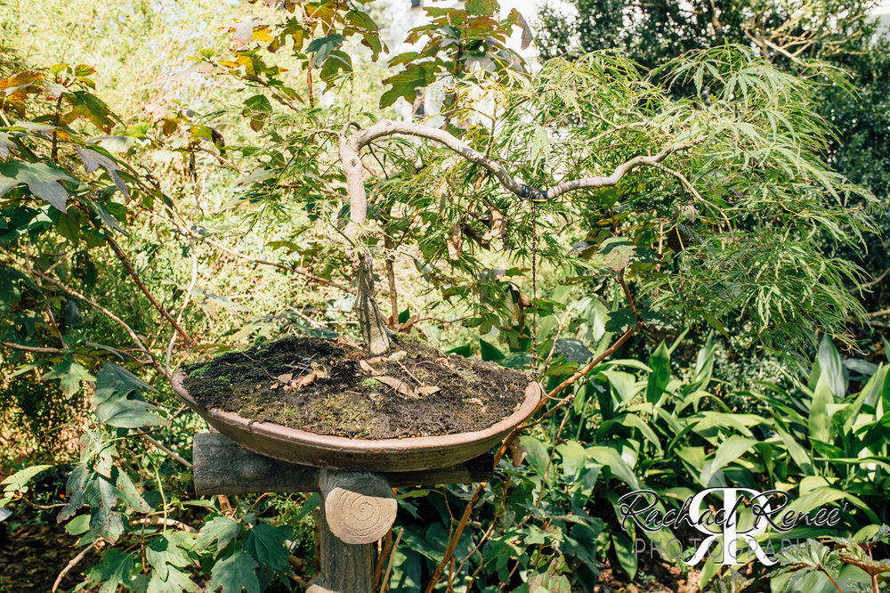 Elm St Gardens or Oasis Family Farm Web-4.jpg