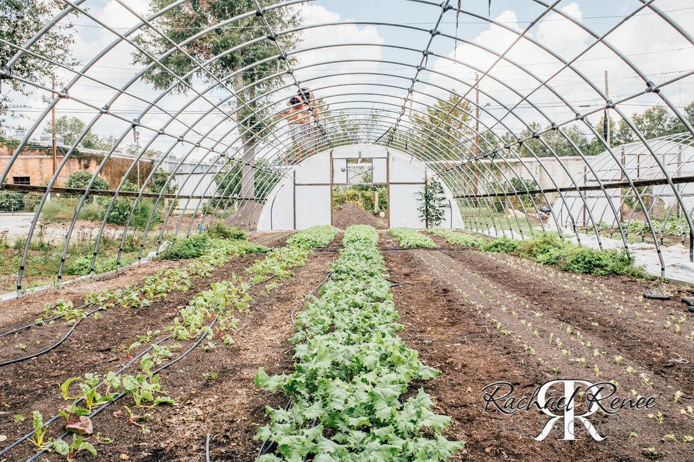 Elm St Gardens or Oasis Family Farm Web-25.jpg
