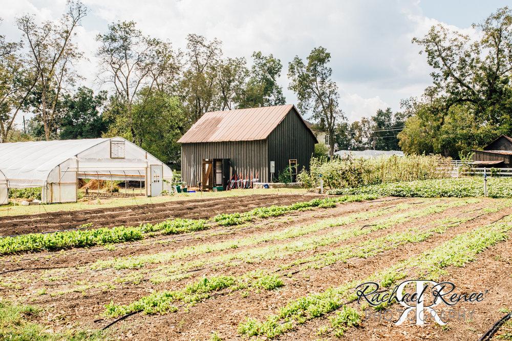 Elm St Gardens or Oasis Family Farm Web-27.jpg
