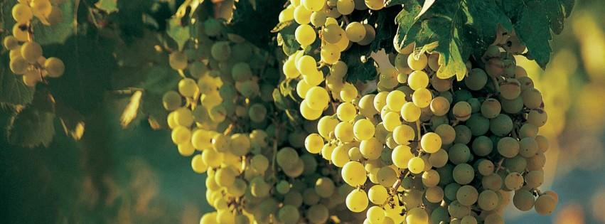 wine bar יין בר tasting room טייסטינג רום ענבים