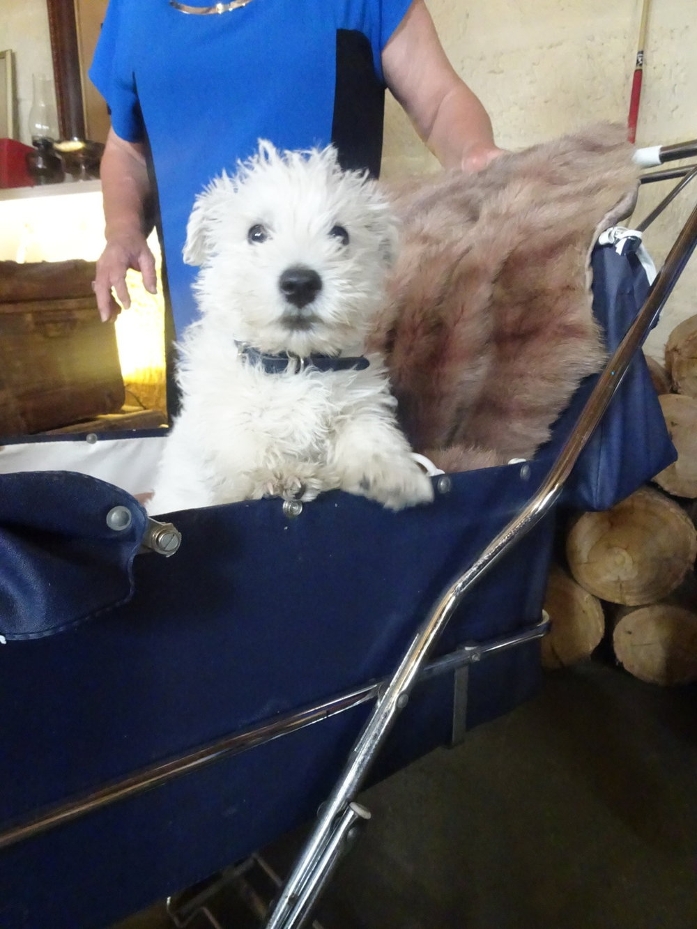 Get in touch with us. Bonus points if you're as cute as this little distillery canine cutie pie.