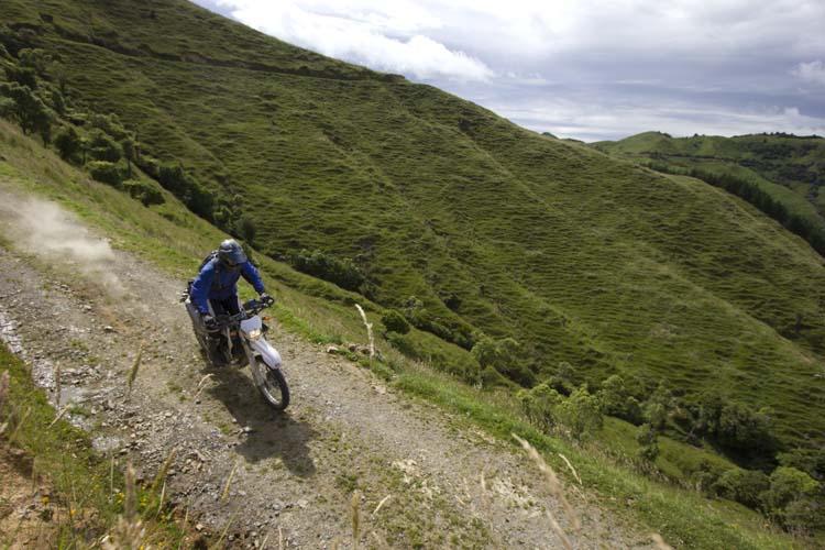 NZEastCoastSafari125.jpg