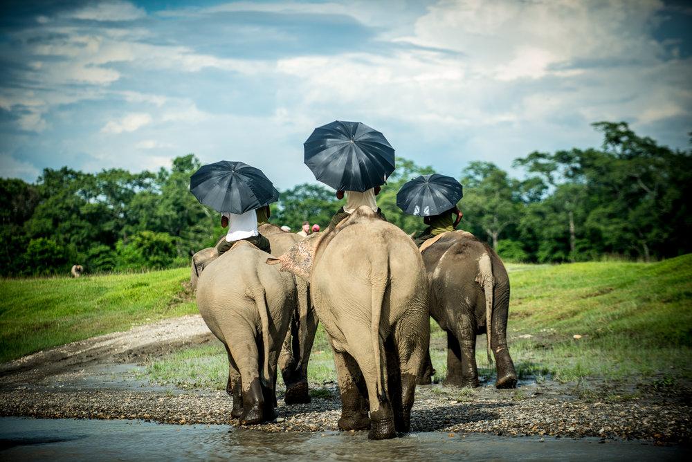 Randazzo_Chitwan_20160703_00622.jpg