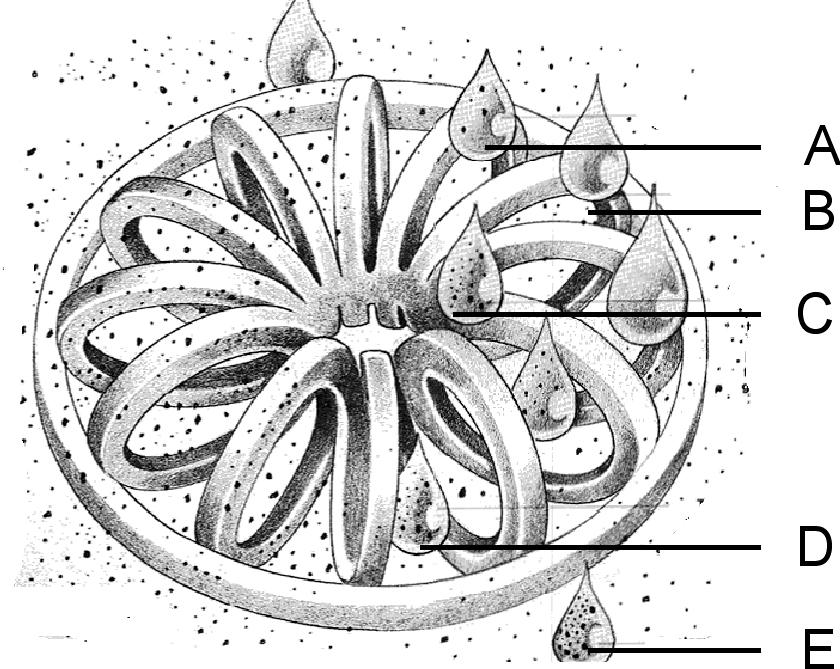 Tellerette SketchX copy.jpg