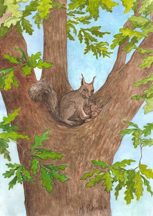 Mari Puhakka | Oravainen - postikortti