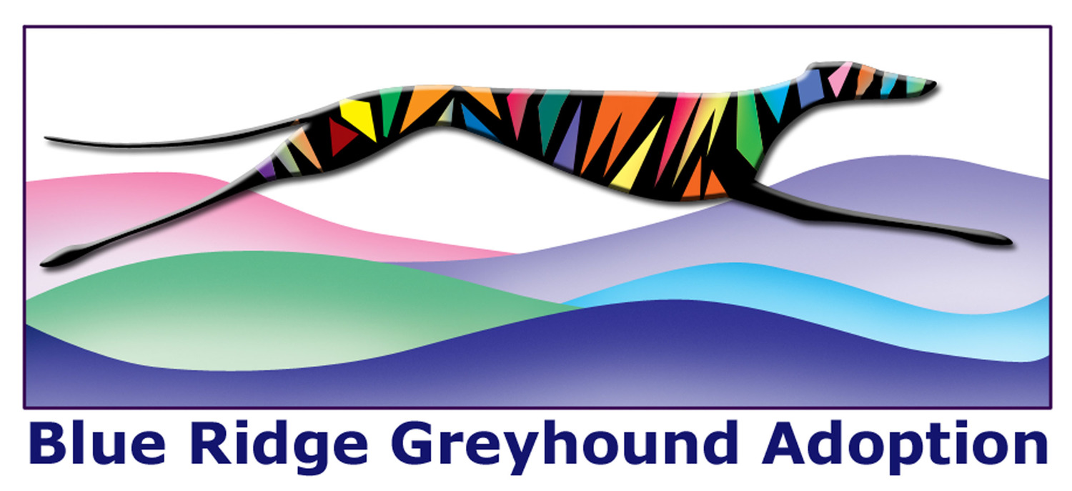 Blue Ridge Greyhound Adoption
