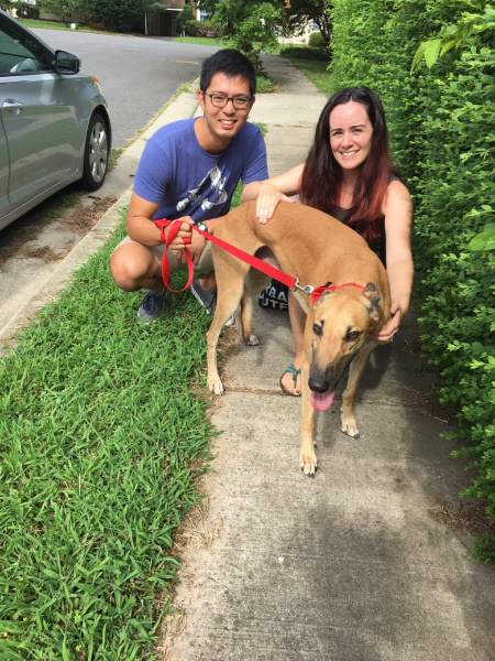 Rocket can sure go....right into the hearts of Hannah and George! It was almost immediate as he followed George and Hannah from the moment they saw him. Rocket will be enjoying walks in the city and much relaxing rest time at home with his new family.